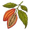 Renude Cacao